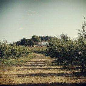 Quinta do Pombo - Turismo Rural
